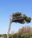 pino-ostia